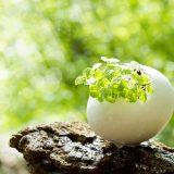 卵殻膜美容液 エイジングケア