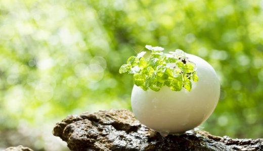 卵殻膜化粧品おすすめ12選!美肌効果が認められてる成分や働きとは?