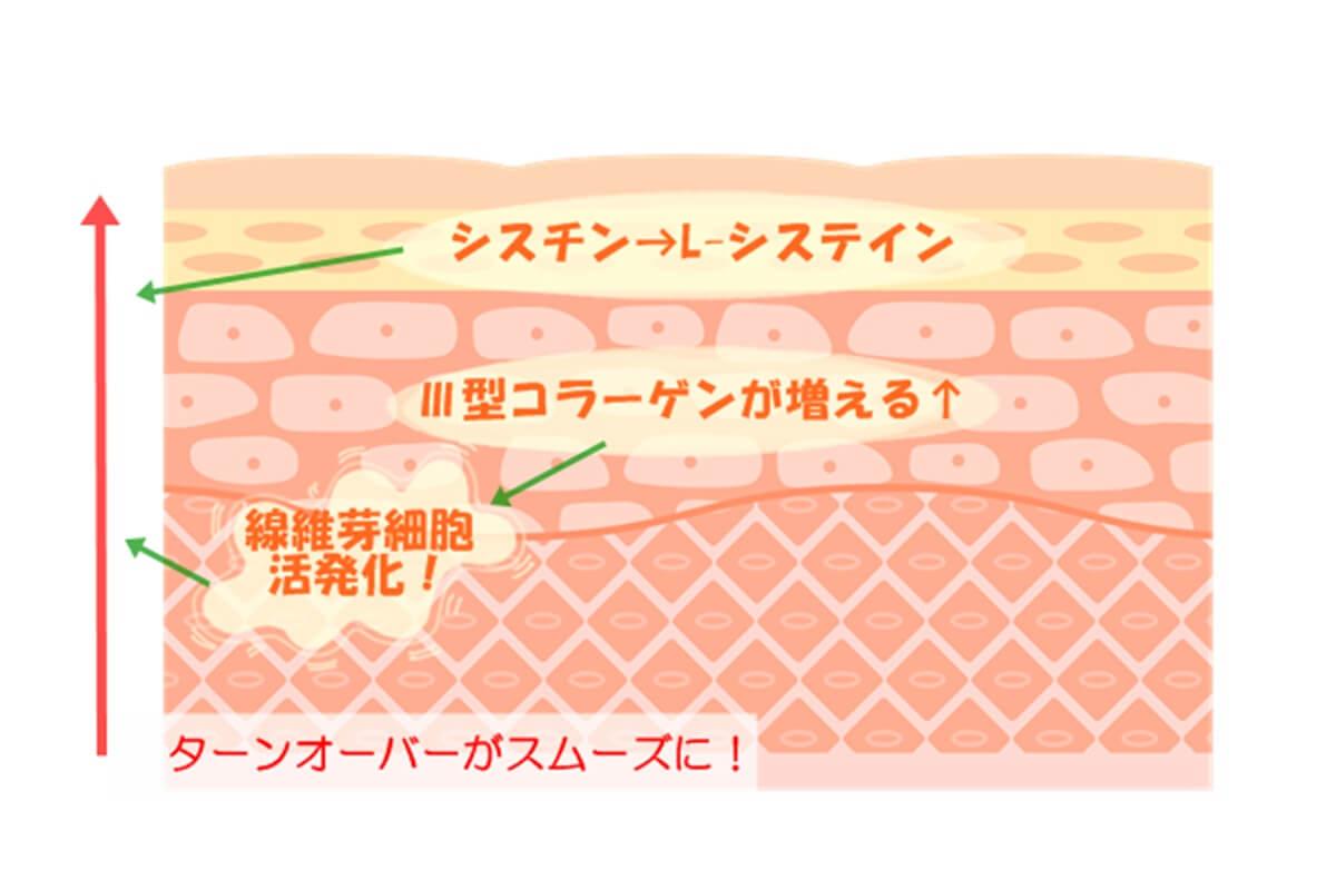 卵殻膜エキス 美容効果