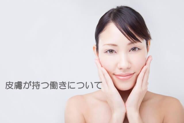 肌の基礎知識 構造 皮膚の働き