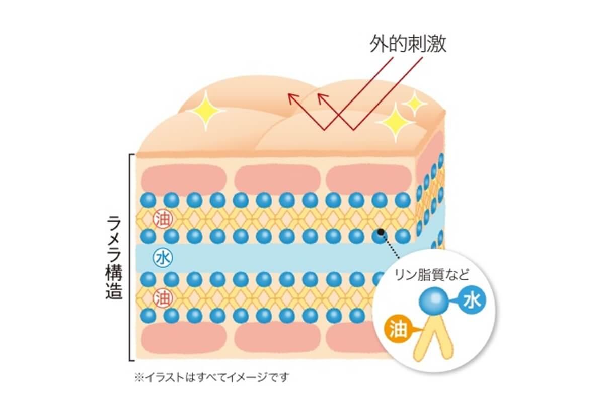 肌構造 皮膚の働き
