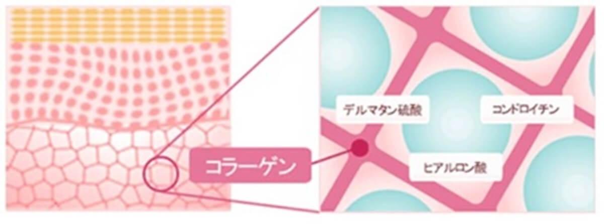 AGEST幹細胞美容液&プラセンタサプリ デルタ硫酸