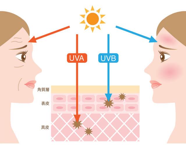 紫外線 ニッピコラーゲン