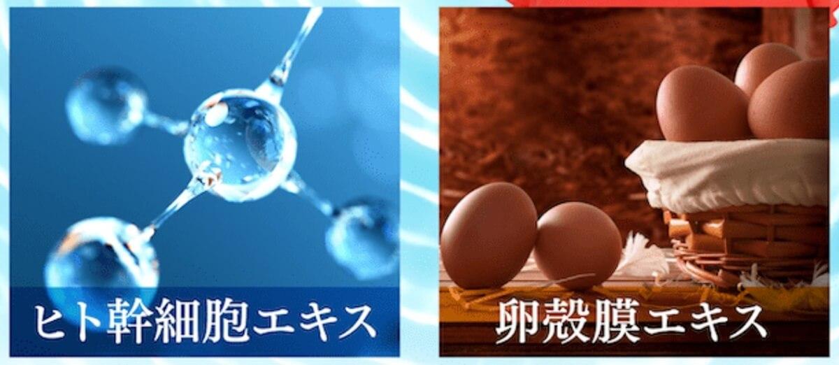 ヒト幹細胞,卵殻膜エキス,美容液,ハニプラ美容液