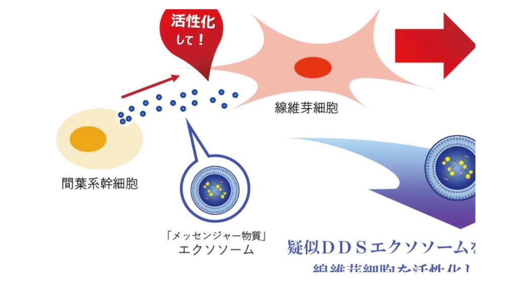 ヒト幹細胞培養液配合DDSエクソソーム導入ジェル